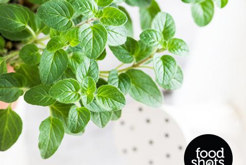 Herbs. Food Stylin and Food Photography Delhi India